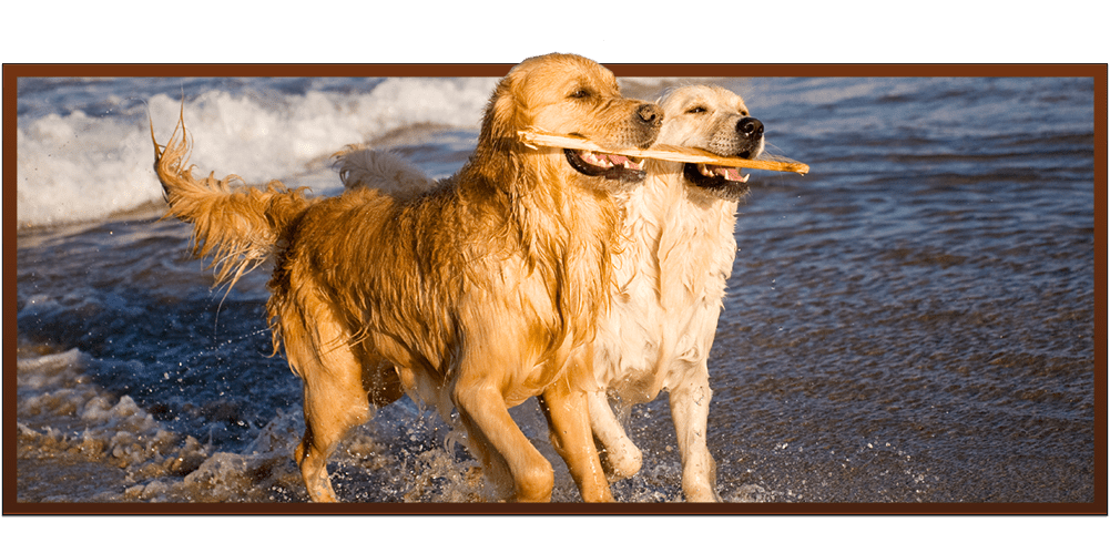 Vet Clinic in Easley & Powdersville, SC | Paw Prints Animal Hospital