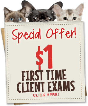 Special Offer! $1 First Time Client Exams. Click here!
