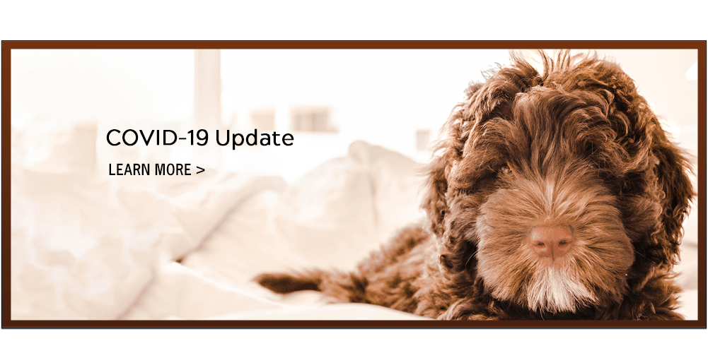 COVID-19 Update. Learn More.